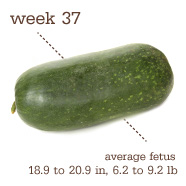 week 37 watermelon
