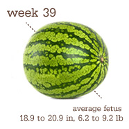 Week 39 Watermelon!!